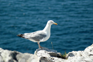 Photos du Finistère