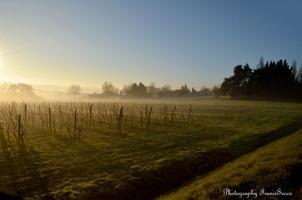 Brume matinale (2)