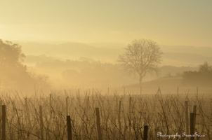 Brume matinale (4)