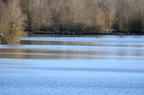 Lac de l'Escourou une zone humide à proteger