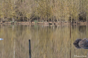 Journée mondiale des zones humides 2017 au lac de l'Escourou (15)