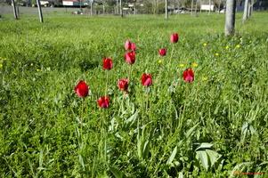 Sortie flore