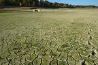Lac de l'Escourou en 2011 (Sécheresse)