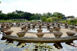 D'autres pots ayant servis pour la culture et l'entretien des nénuphars