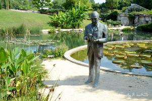 La statue de Latour-Marliac, c'était ici le long des rives du ruisseau que Latour-Marliac tentait ses premiers croisements.