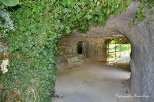 Lierre et grotte