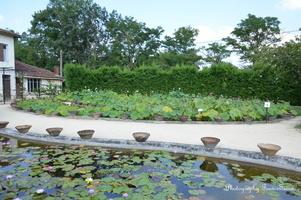 Vue sur les Lotus