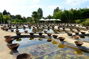 Vue sur les pots ayant servis pour la culture et l'entretien des nénuphars