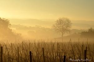 Brume matinale (1)