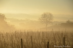 Brume matinale entre Bergerac et Eymet