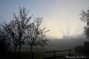 Brume matinale (7).