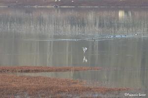 Journée mondiale des zones humides 2017 au lac de l'Escourou (11)