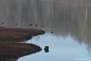 Journée mondiale des zones humides 2017 au lac de l'Escourou (12)