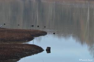 Journée mondiale des zones humides 2017 au lac de l'Escourou (13)