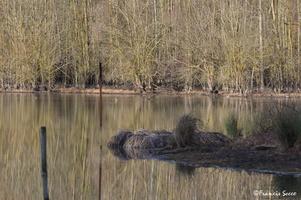 Journée mondiale des zones humides 2017 au lac de l'Escourou (16)