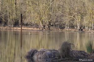Journée mondiale des zones humides 2017 au lac de l'Escourou (17)