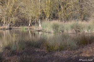 Journée mondiale des zones humides 2017 au lac de l'Escourou (18)