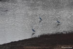 Journée mondiale des zones humides 2017 au lac de l'Escourou (6)