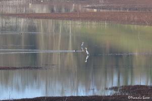 Journée mondiale des zones humides 2017 au lac de l'Escourou (7)