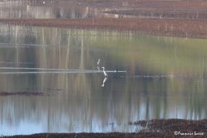 Journée mondiale des zones humides 2017 au lac de l'Escourou (8)