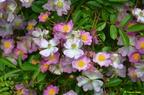 Sortie photo le jardin de Boissonna avec Objectif Duras.